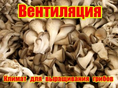 Вентиляция при выращивании грибов